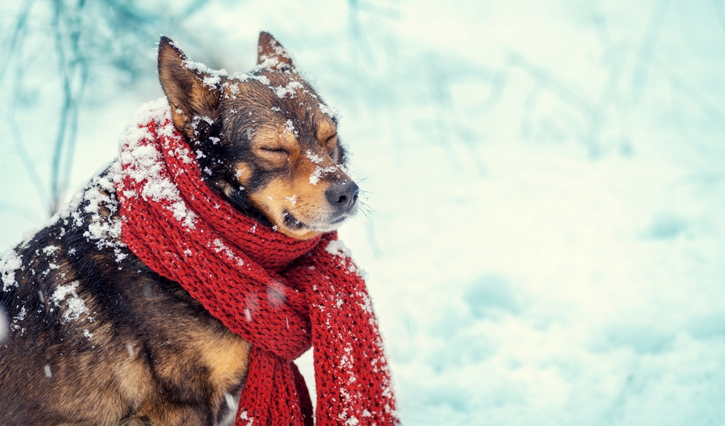 How to protect dogs from cold weather