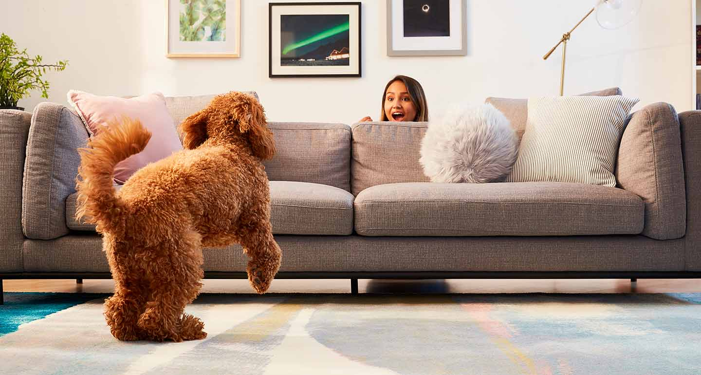 fun things to do with your dog at home