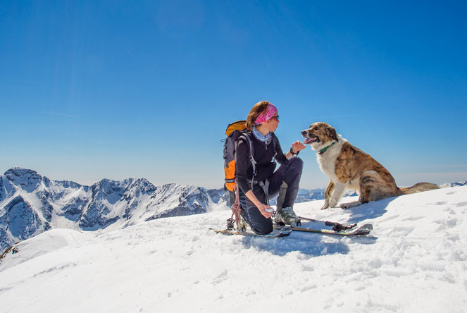 What to do with dogs in the winter