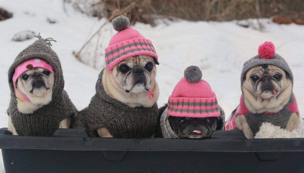 Dogs in winter story