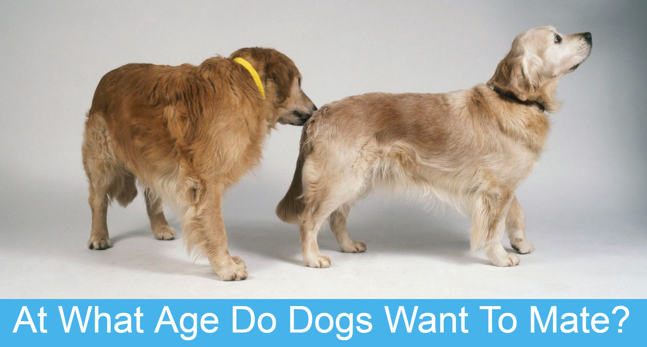 When can you breed a female dog