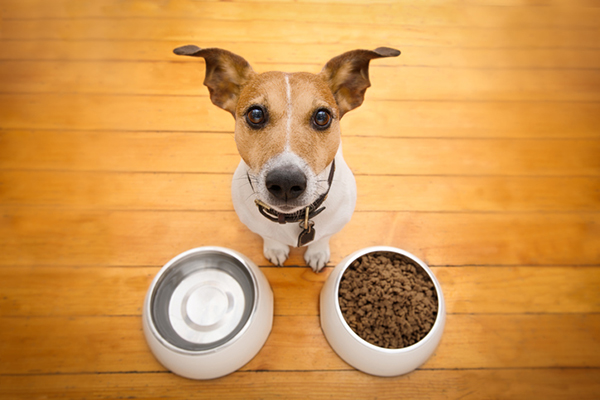 Feeding Your Dog: How Often Should Dogs Eat And How Much