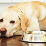 Dog Feeding Time: How Much and How Often?