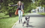 Easy Dog Walking Tips Everyone Should Know