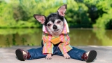Small Dog Coats For Winter | World Class Reviews