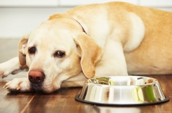 Feed A Dog, 7 Tips For Newbies