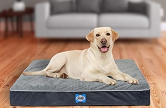 Memory Foam Dog Beds. Types And Functions Of The Same.