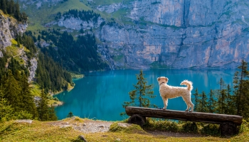7 Summer Health Care Tips for Dogs