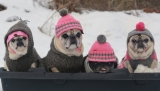 How To Take Care Of Your Dog In The Winter